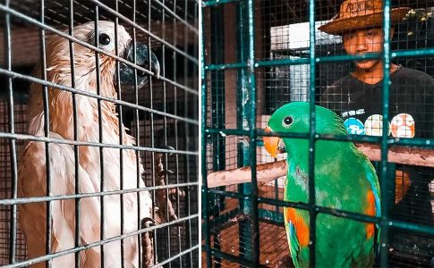 Trafficked Animals