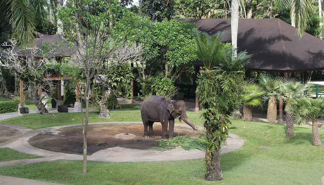 Elephant Park Taro Bali