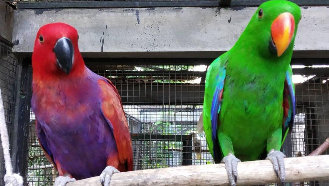 Bali Wildlife Rescue Centre
